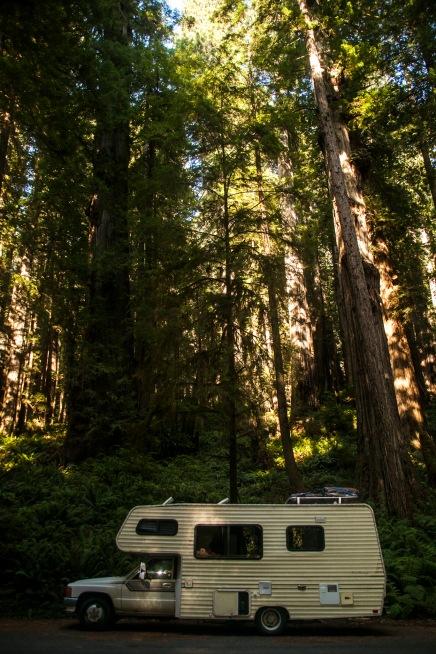 Parkinglot at Sequoia NP