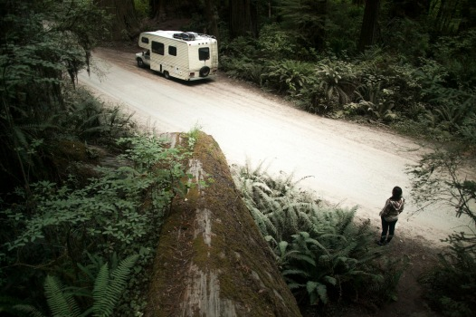 Trail Head in Redwoods N&SP